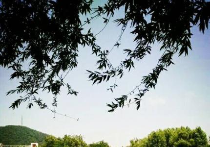 美丽如琴湖畔
